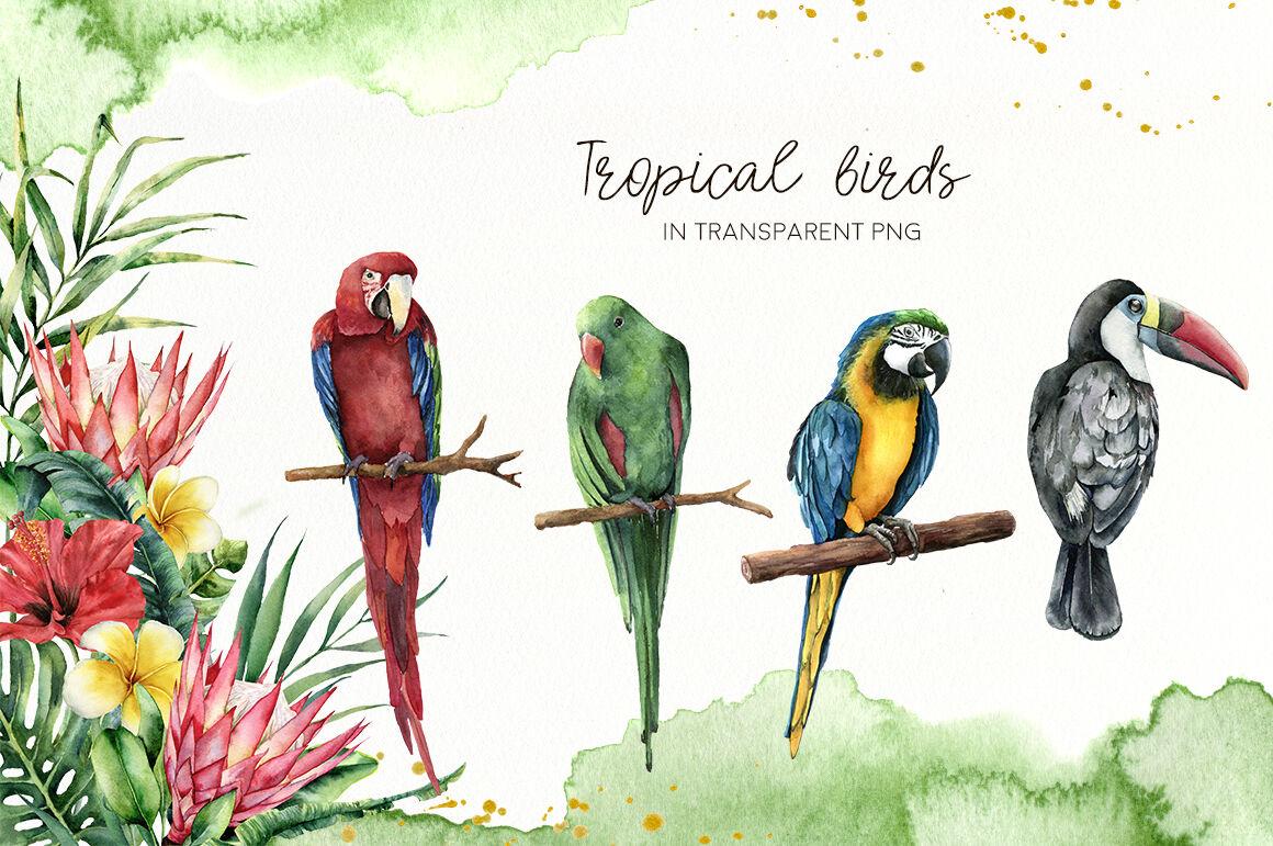 Tropical summer. Watercolor clip art By Yuliya Derbisheva ...