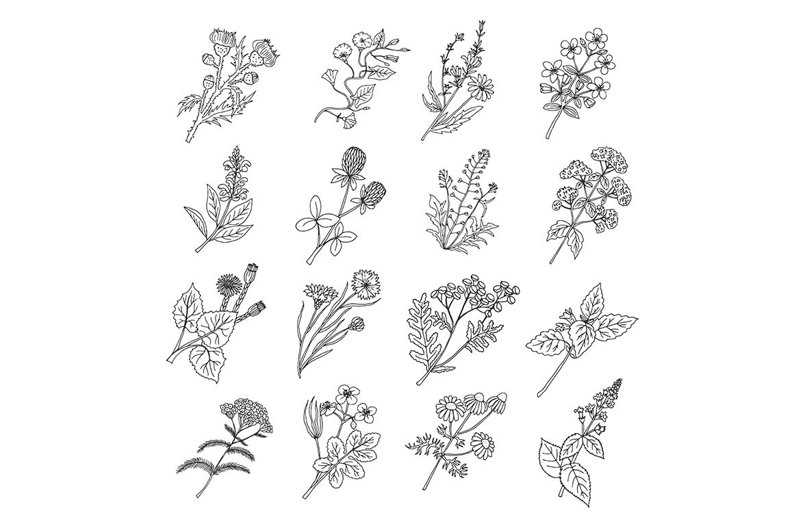 Botanical Sketch Drawings Vector Illustration Of Flowers And
