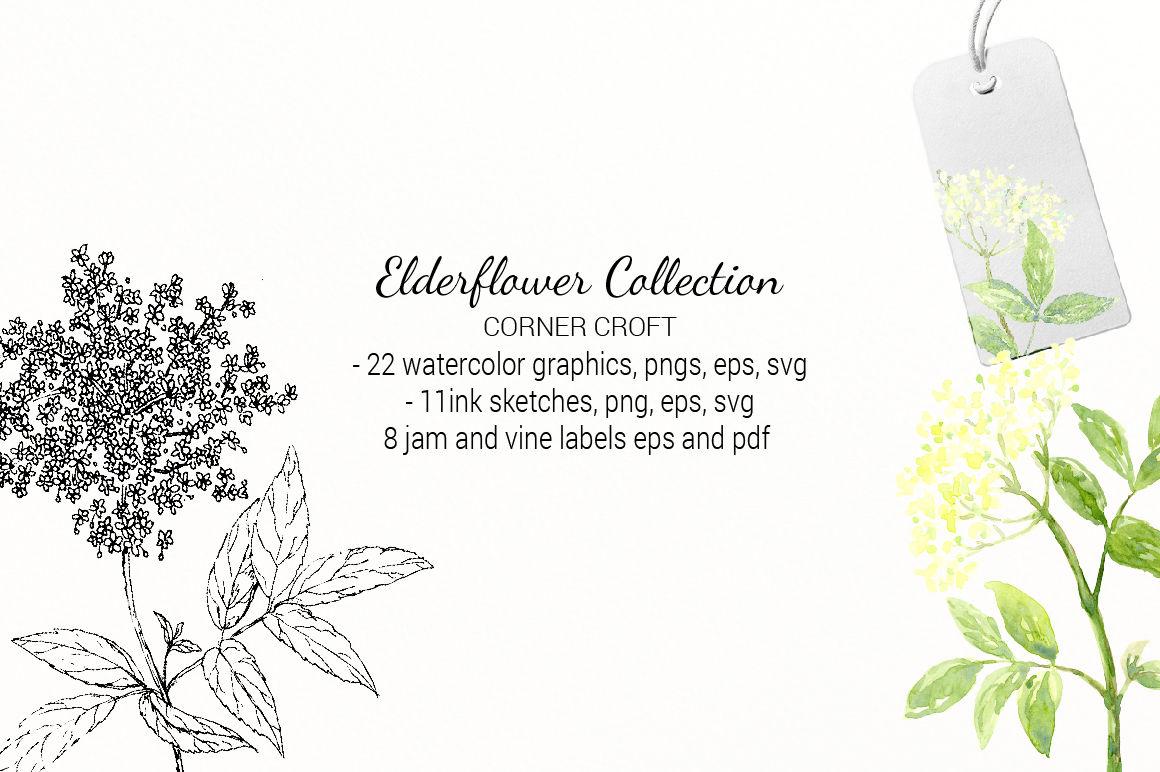 Elderberry Elderflower Illustration By Cornercroft Thehungryjpeg Com