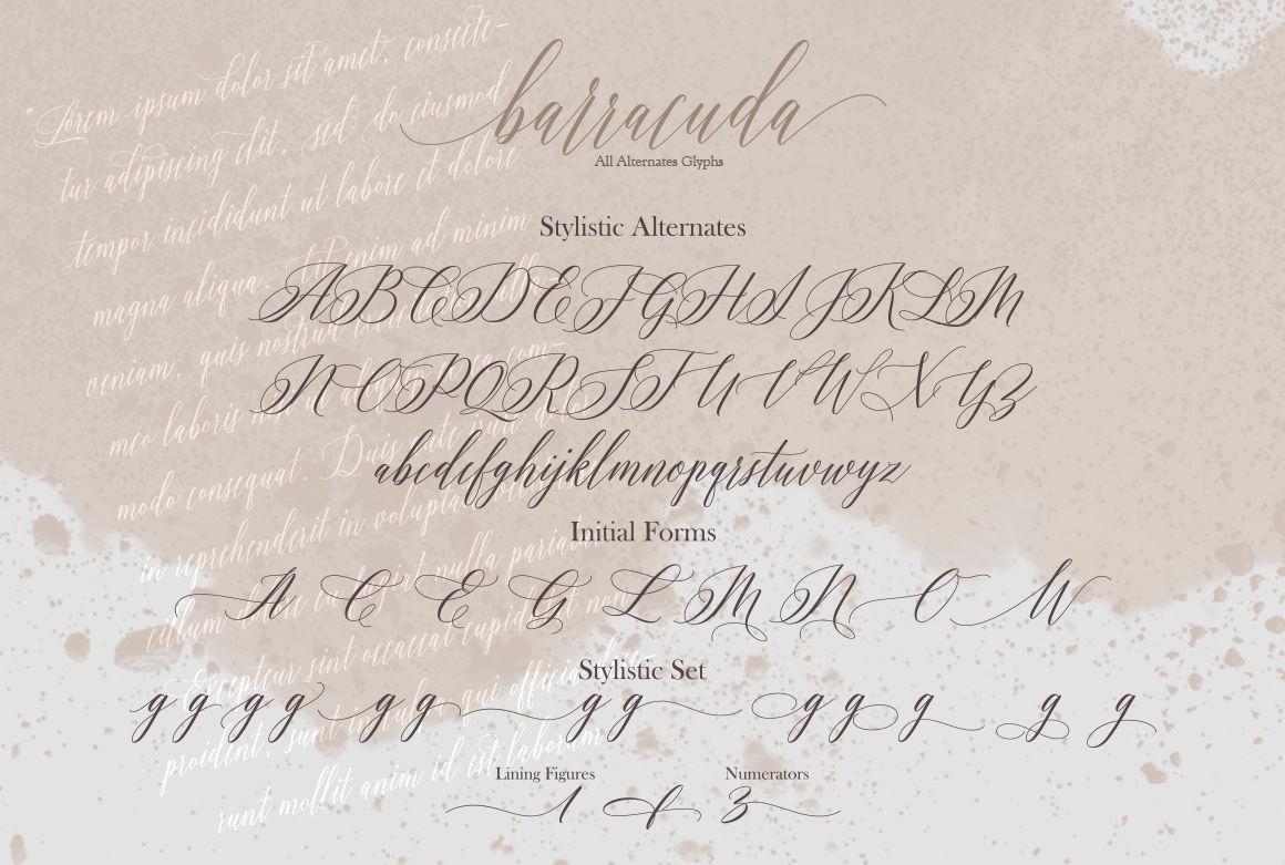 Barracuda Script By Joelmaker Thehungryjpeg Com