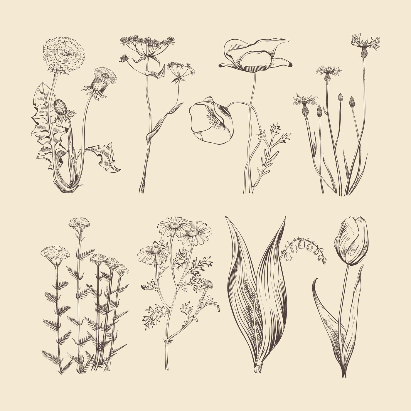 Wildflowers Herbs And Flower Hand Drawing Vector Illustration By