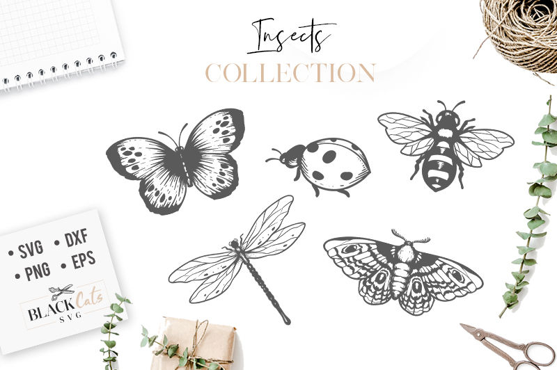 Insects Set Svg Insects By Blackcatssvg Thehungryjpeg Com