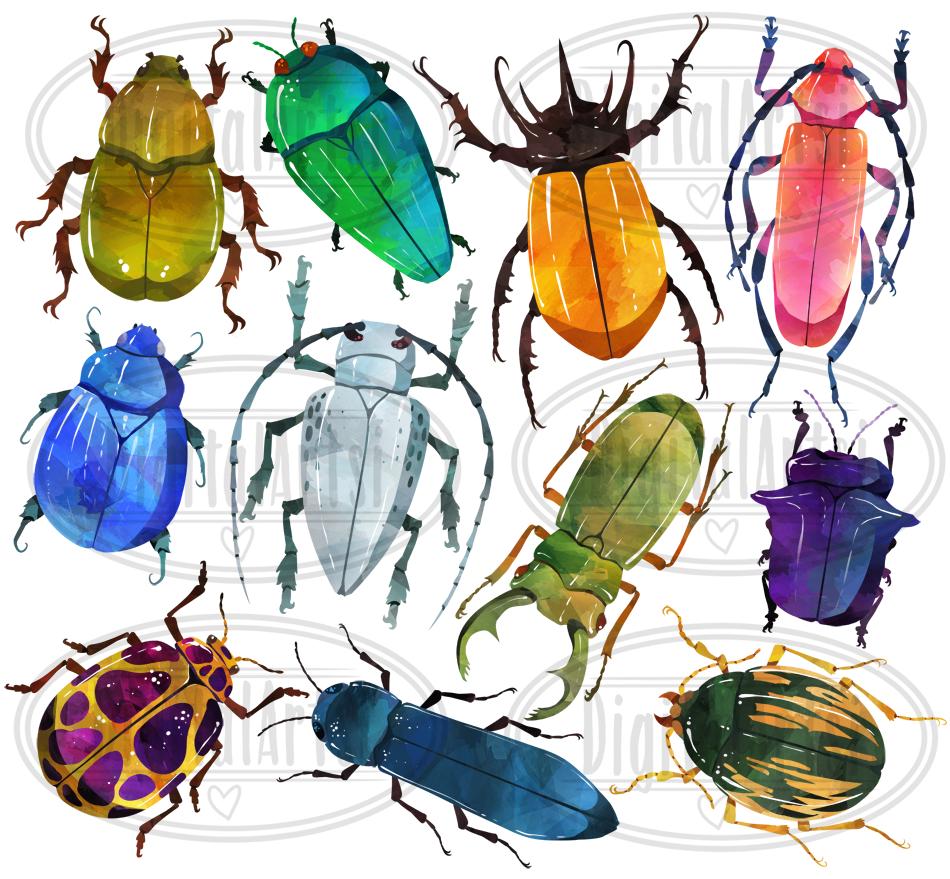 Watercolor Beetle Clipart By Digitalartsi Thehungryjpeg Com