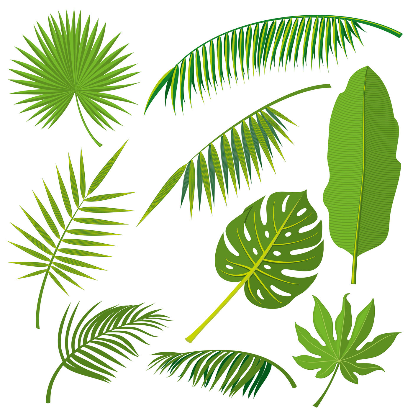 Tropical Palm Tree Jungle Leaves Vector Set By Microvector