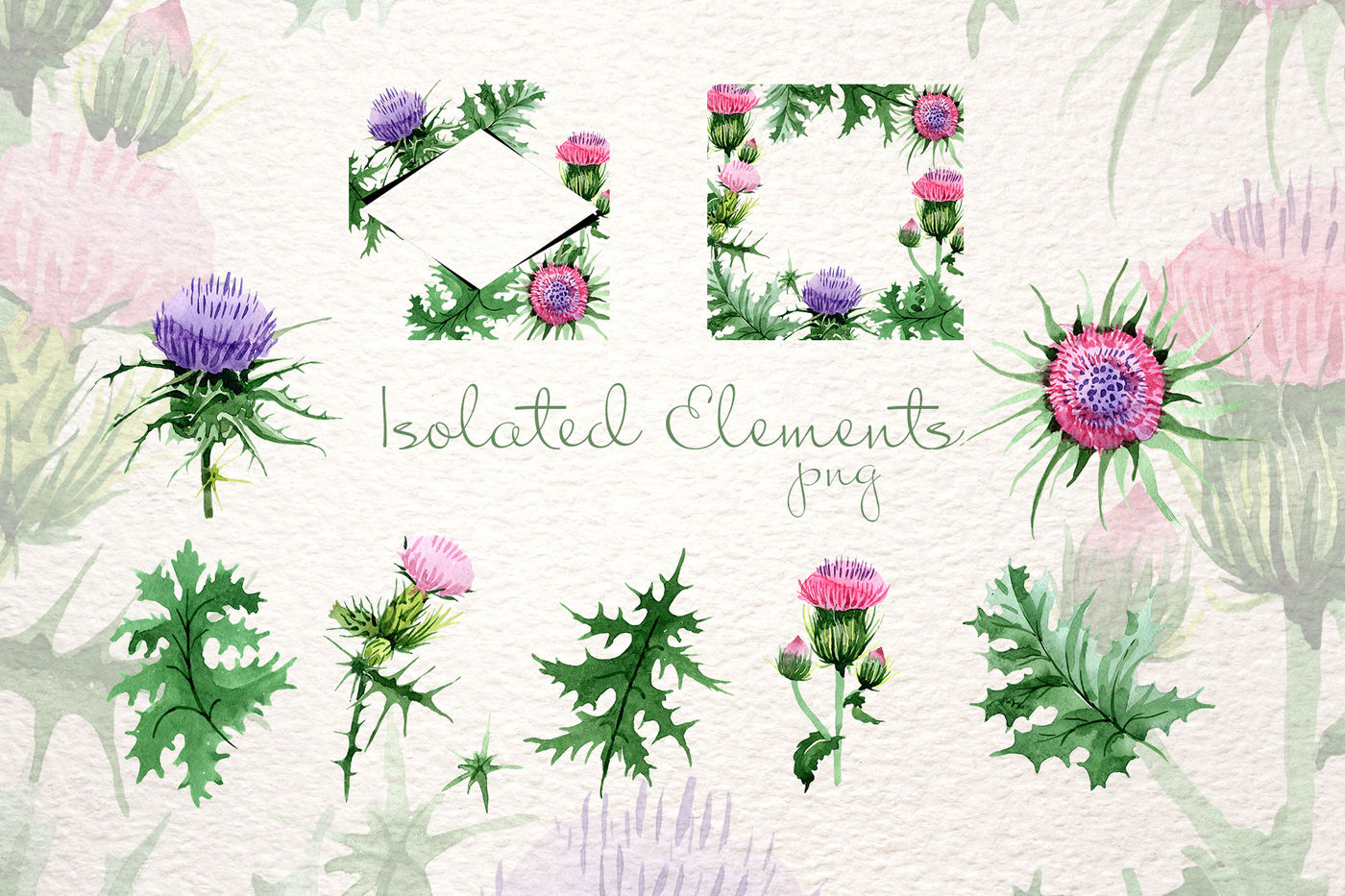 88f5683ea Cool Thistle PNG watercolor set By MyStocks | TheHungryJPEG.com