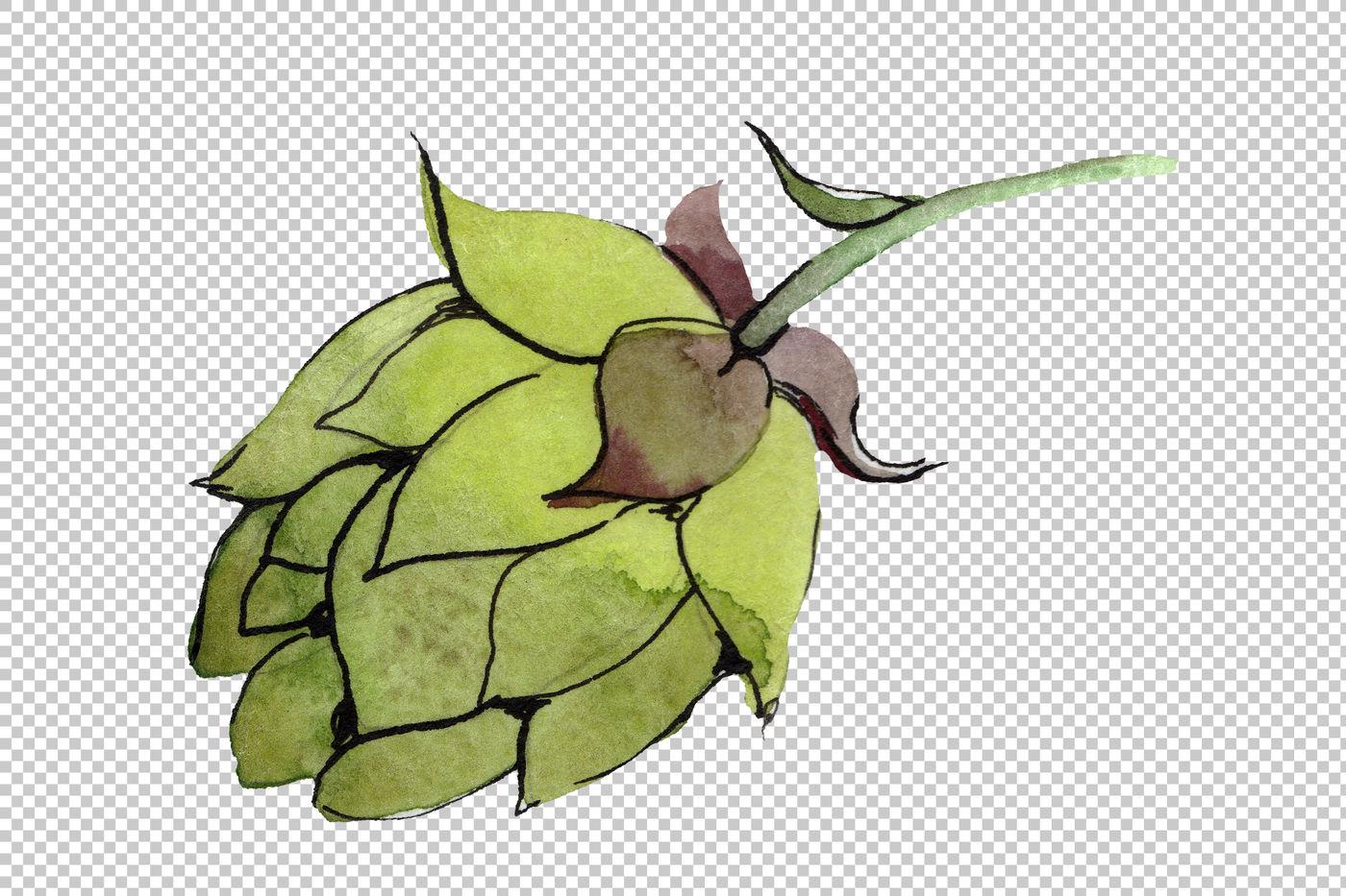 Green Watercolor Hops Png Set By Mystocks Thehungryjpeg Com