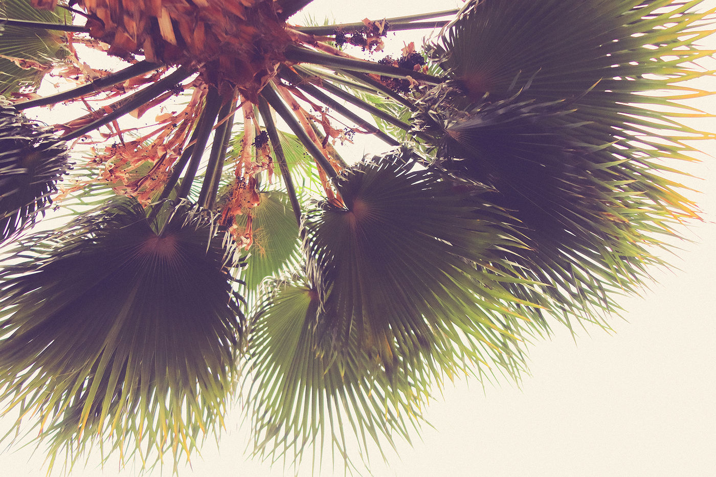 11 Palm Leaves Textures By Textures Overlays Store