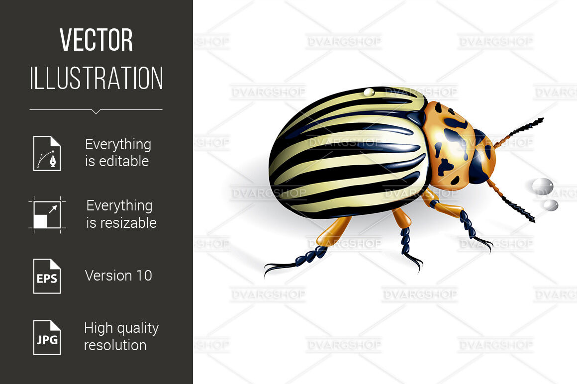 The Colorado Potato Beetle By Dvargshop Thehungryjpeg Com