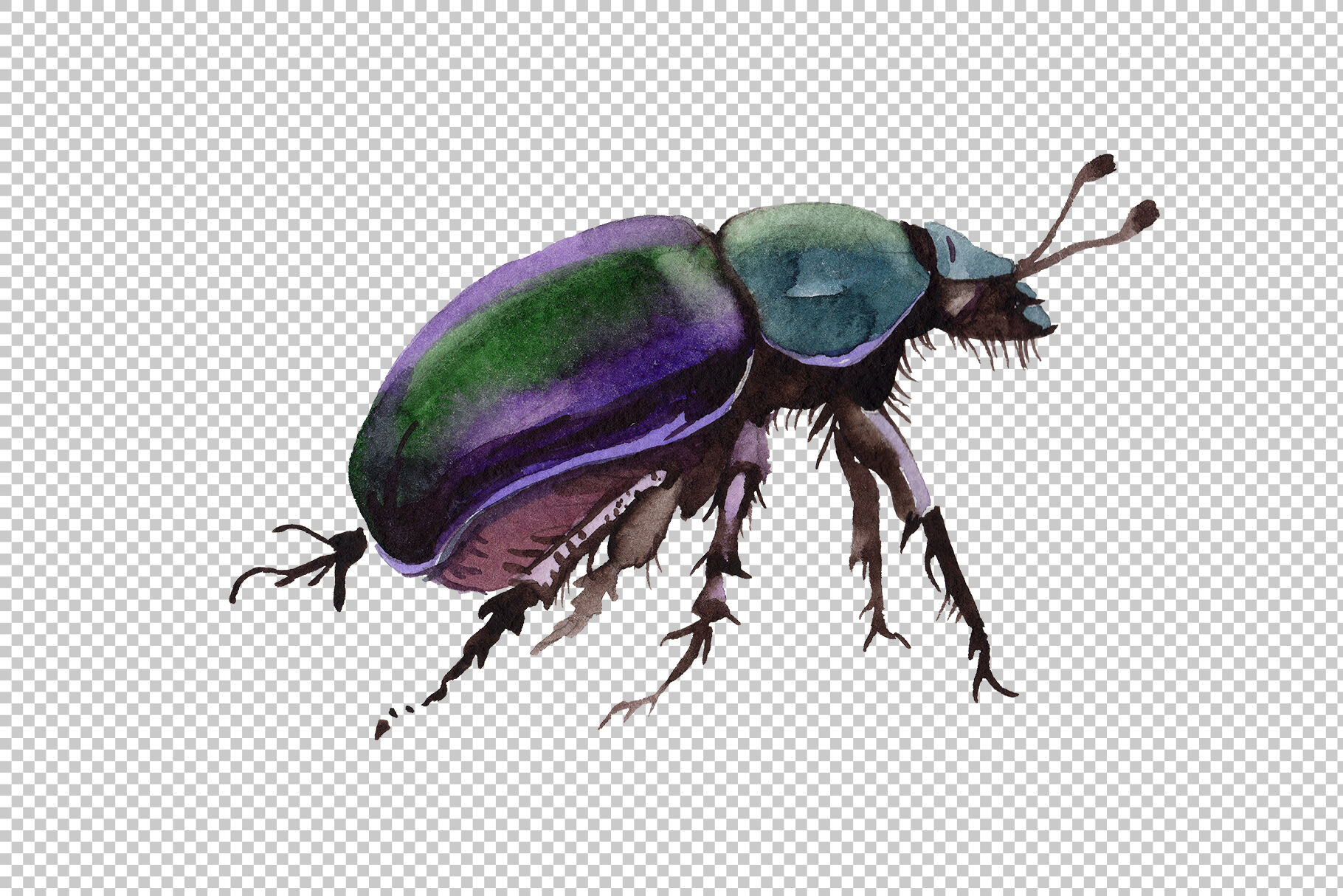 May Beetle Ordinary Watercolor Png By Mystocks Thehungryjpeg Com