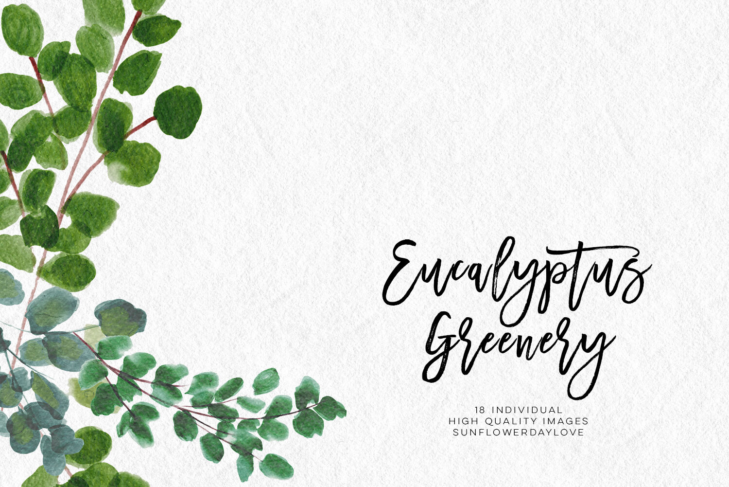 Greenery Leaf Watercolor clipart, Eucalyptus clipart By Sunflower ...