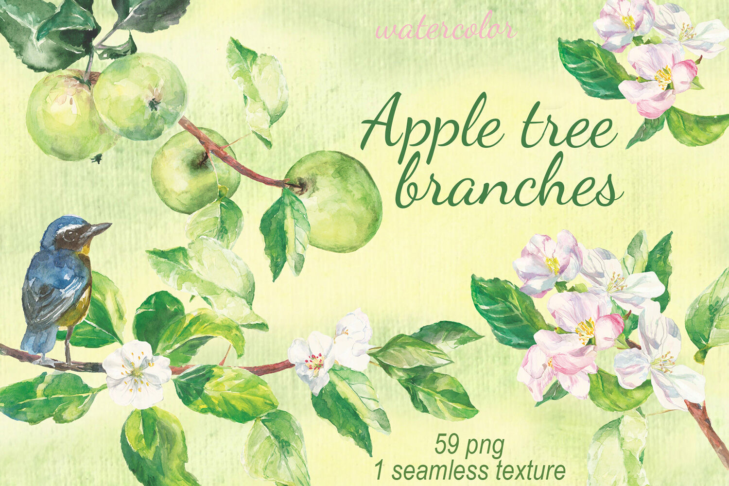 Watercolor Apple tree branches clip art By Dolly Potterson ... (1500 x 1000 Pixel)