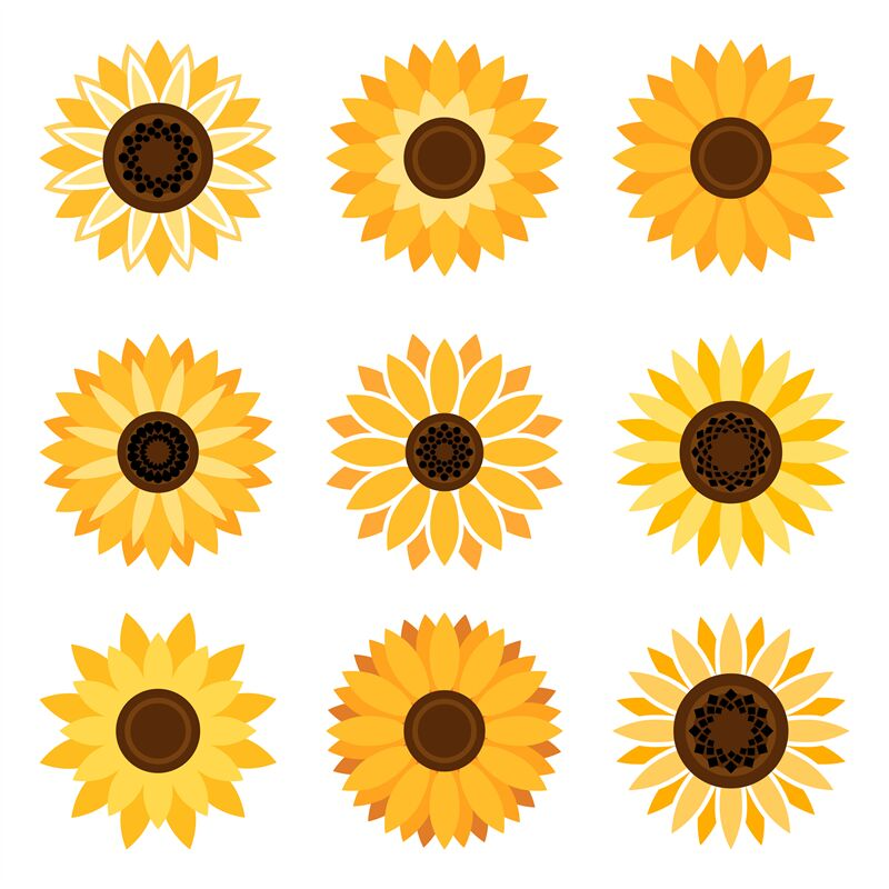 Sunflower emblem set By vectortatu | TheHungryJPEG.com