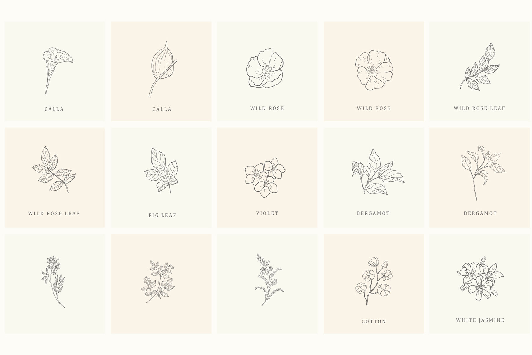 Botanical Hand Drawn Designs Logo Frames By Designwork