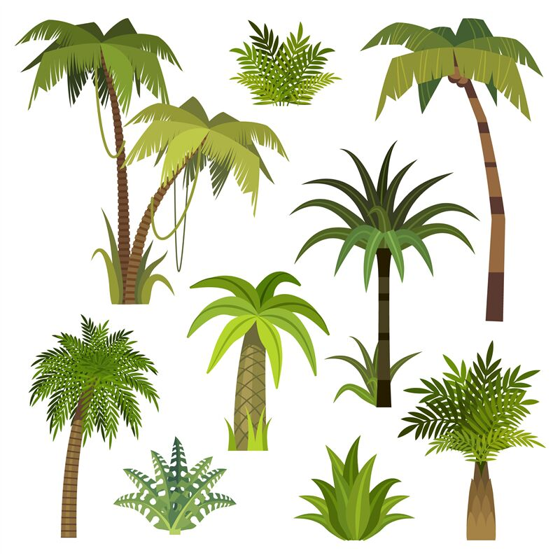 Cartoon Palm Tree Jungle Palm Trees With Green Leaves Exotic