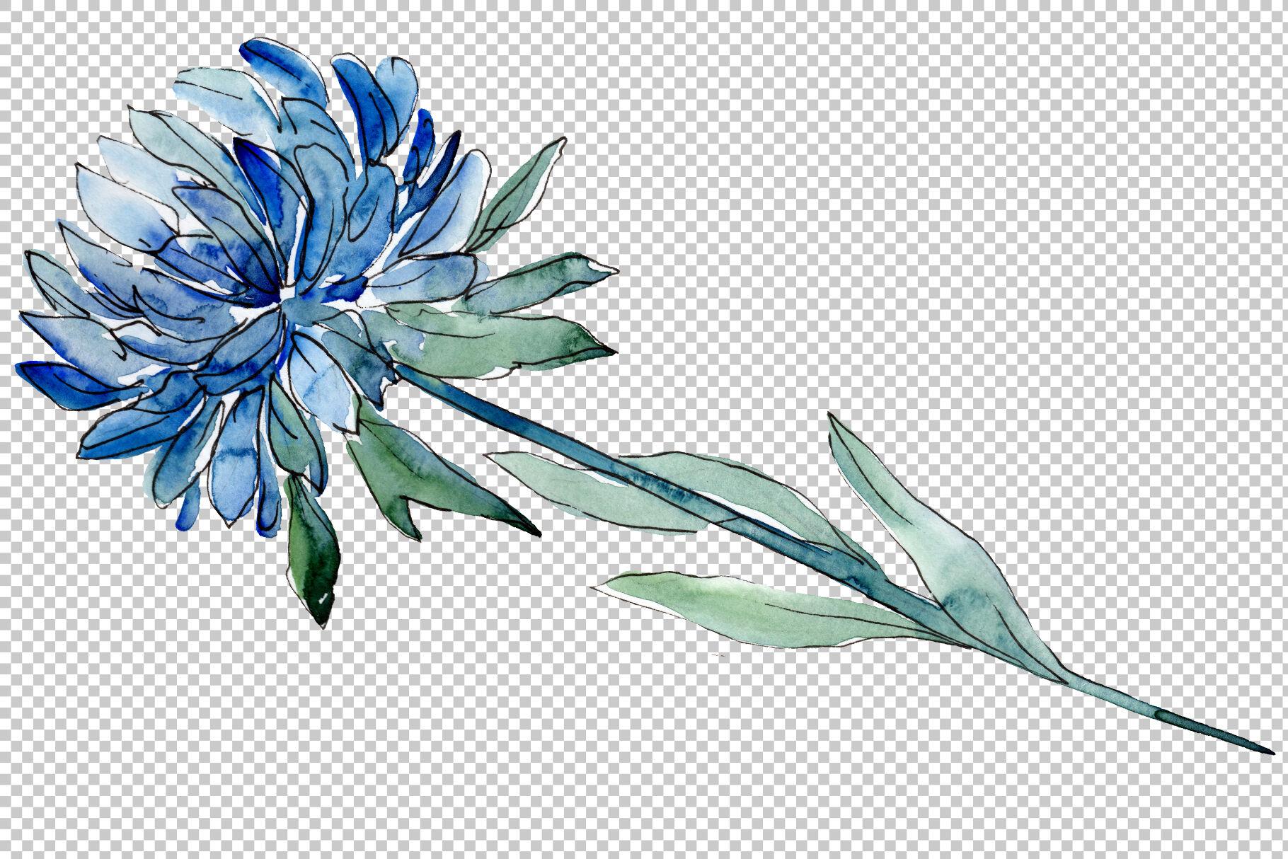 Aster Flowers Strength Of Feelings Watercolor Png By Mystocks