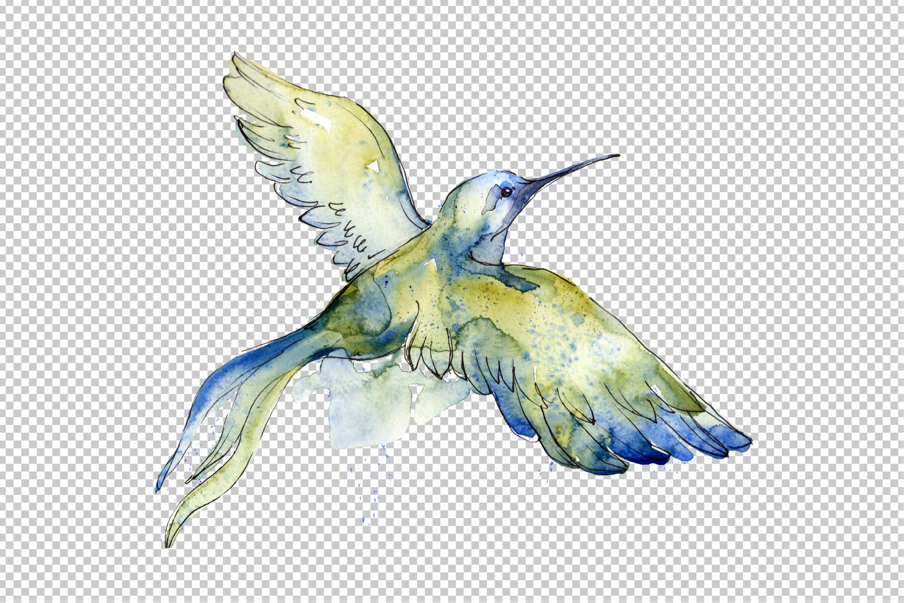 Colibri Small Bird Watercolor Png By Mystocks Thehungryjpeg Com