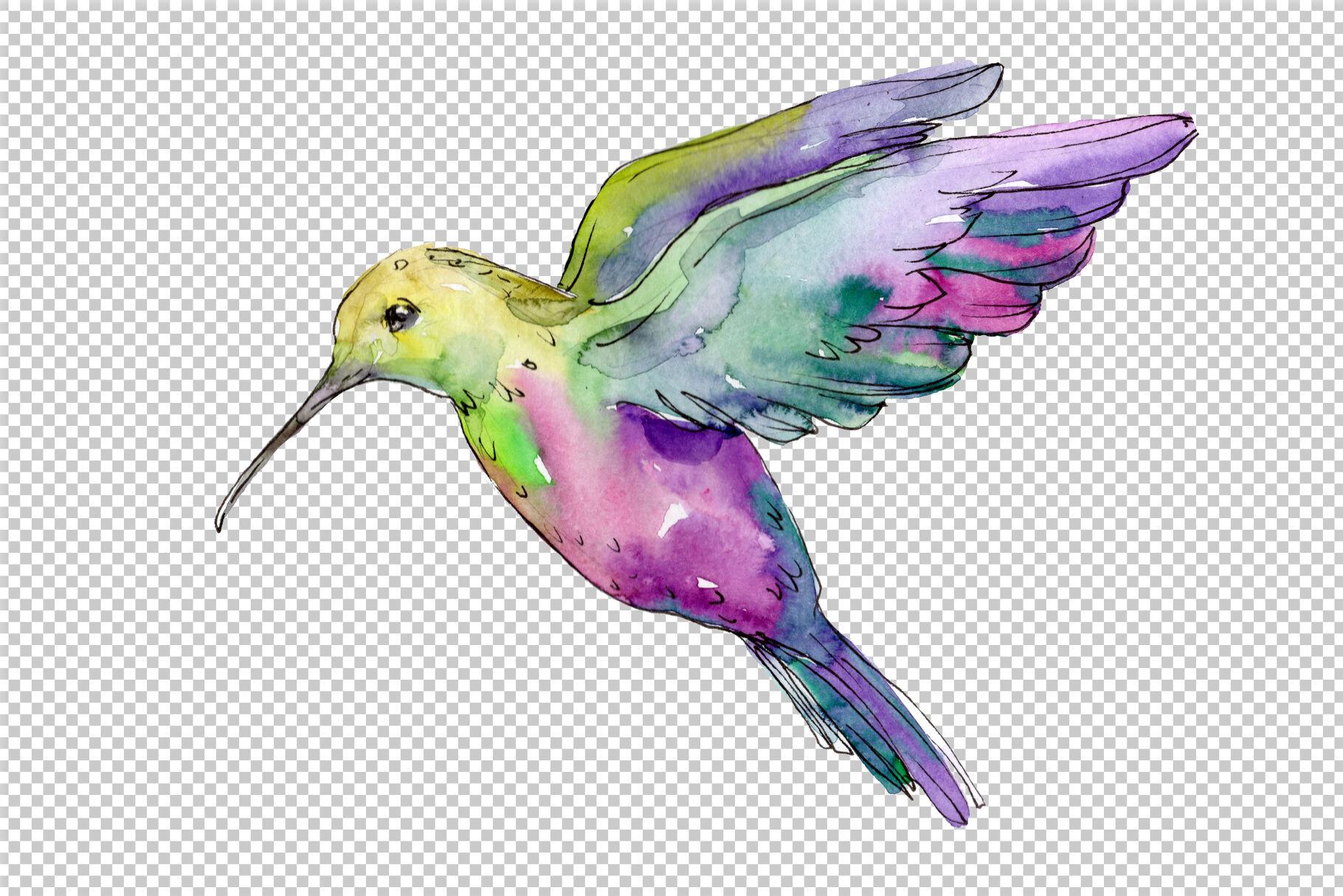 Nature World Bird Hummingbird Watercolor Png By Mystocks