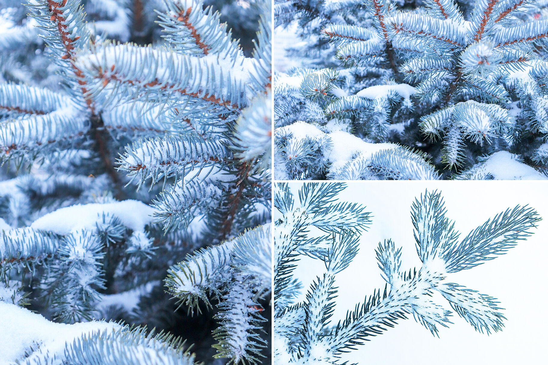 13 Blue Tree Background Textures By Textures Overlays Store