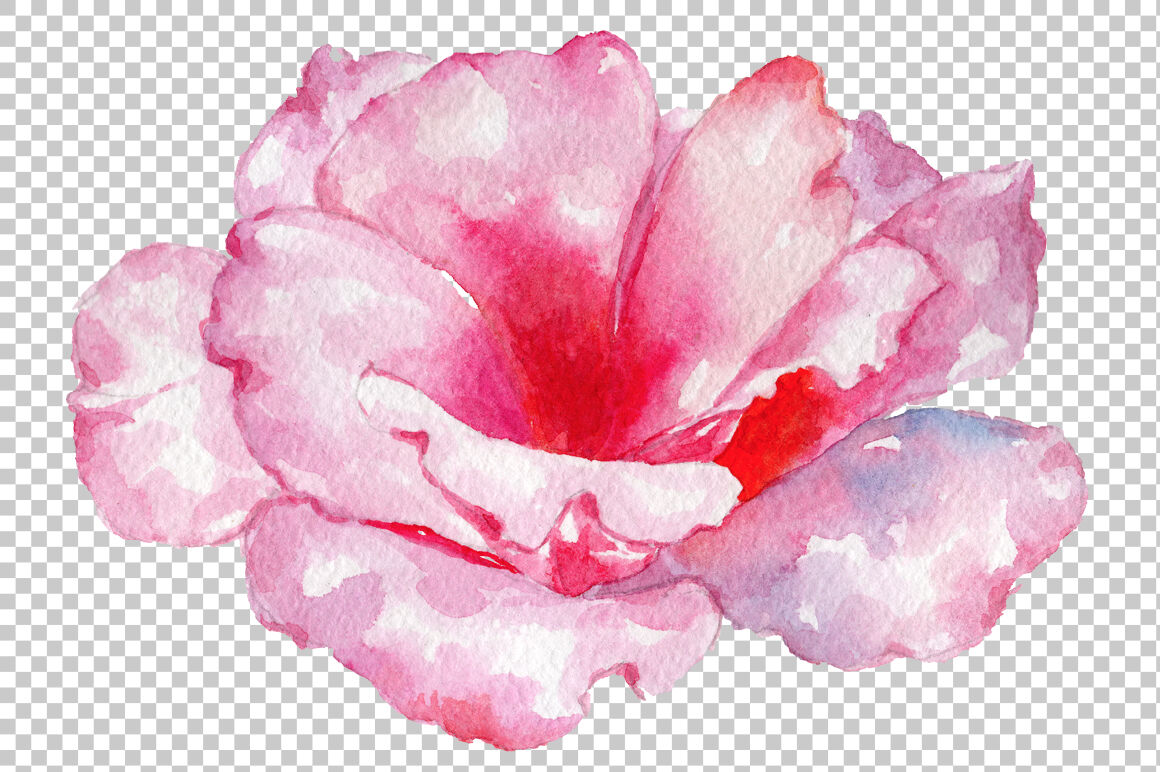 Pink Rose Strength Of Love Watercolor Png By Mystocks