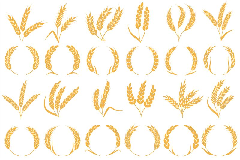 Wheat Or Barley Ears Golden Grains Harvest Stalk Grain Wheat