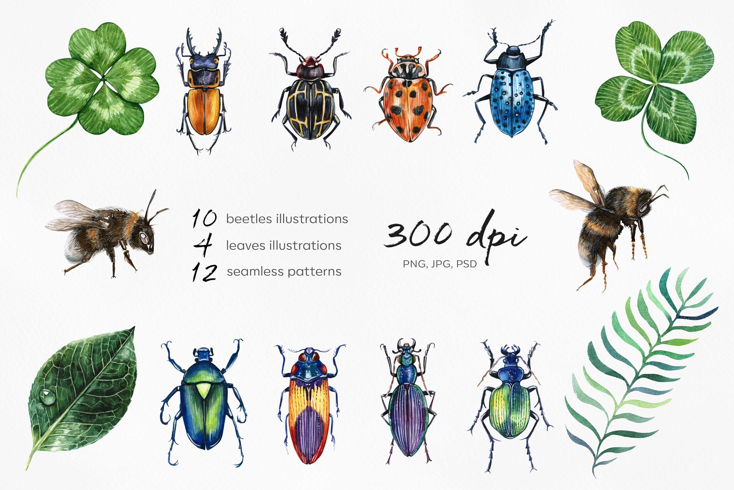 Beetles Leaves Watercolor Set Illustrations By Susik Shop