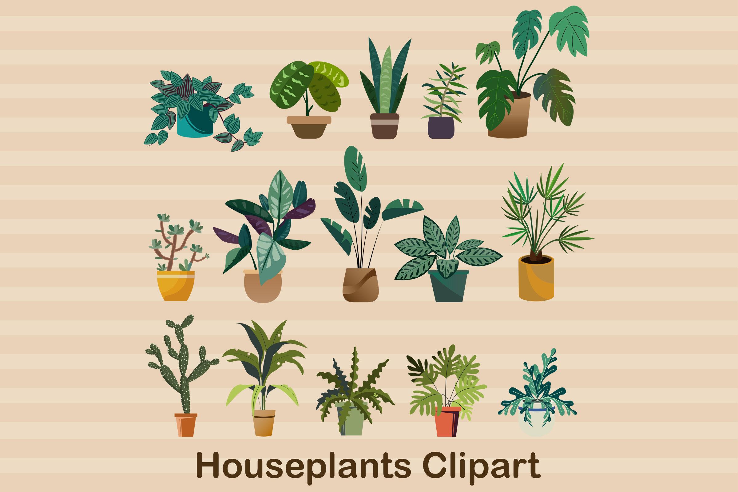 House Plants And Flowers Stock Vektor Art und mehr Bilder von Aloe - iStock