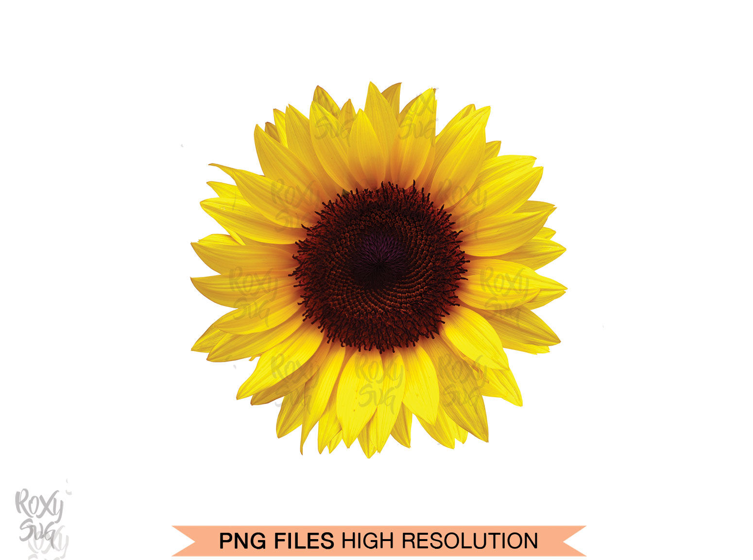 Half Sunflower Whole Sunflower Sunflower Clipart By Lovely