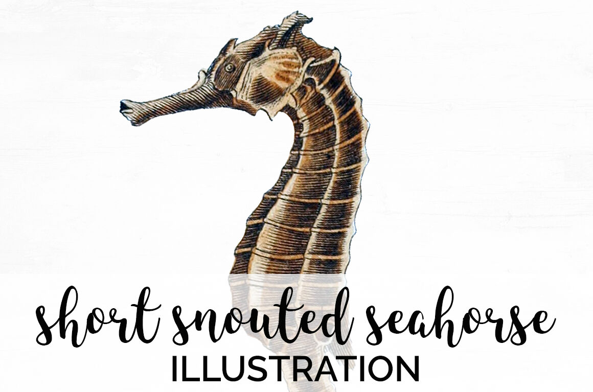 Seahorse By Enliven Designs Thehungryjpeg Com
