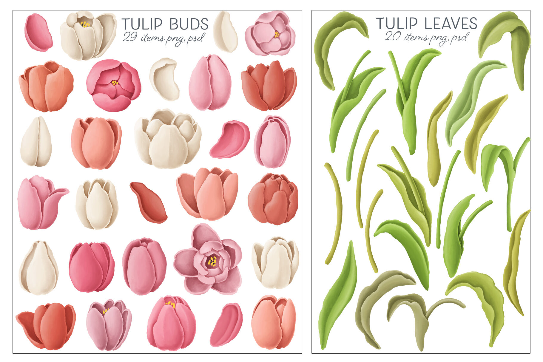 Tulips Flowers Patterns Borders By An Kle Thehungryjpeg Com