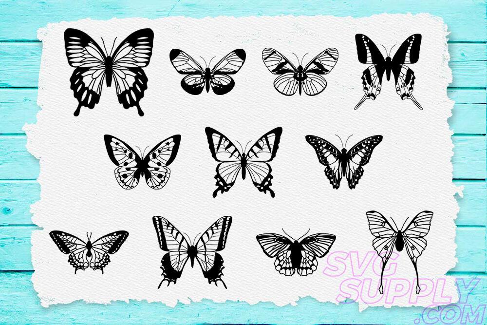 Butterfly Lineart Svg Bundle By Cuttingsvg Thehungryjpeg Com