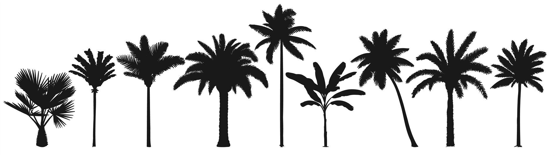Palm Trees Silhouette Retro Coconut Trees Hand Drawn Tropical
