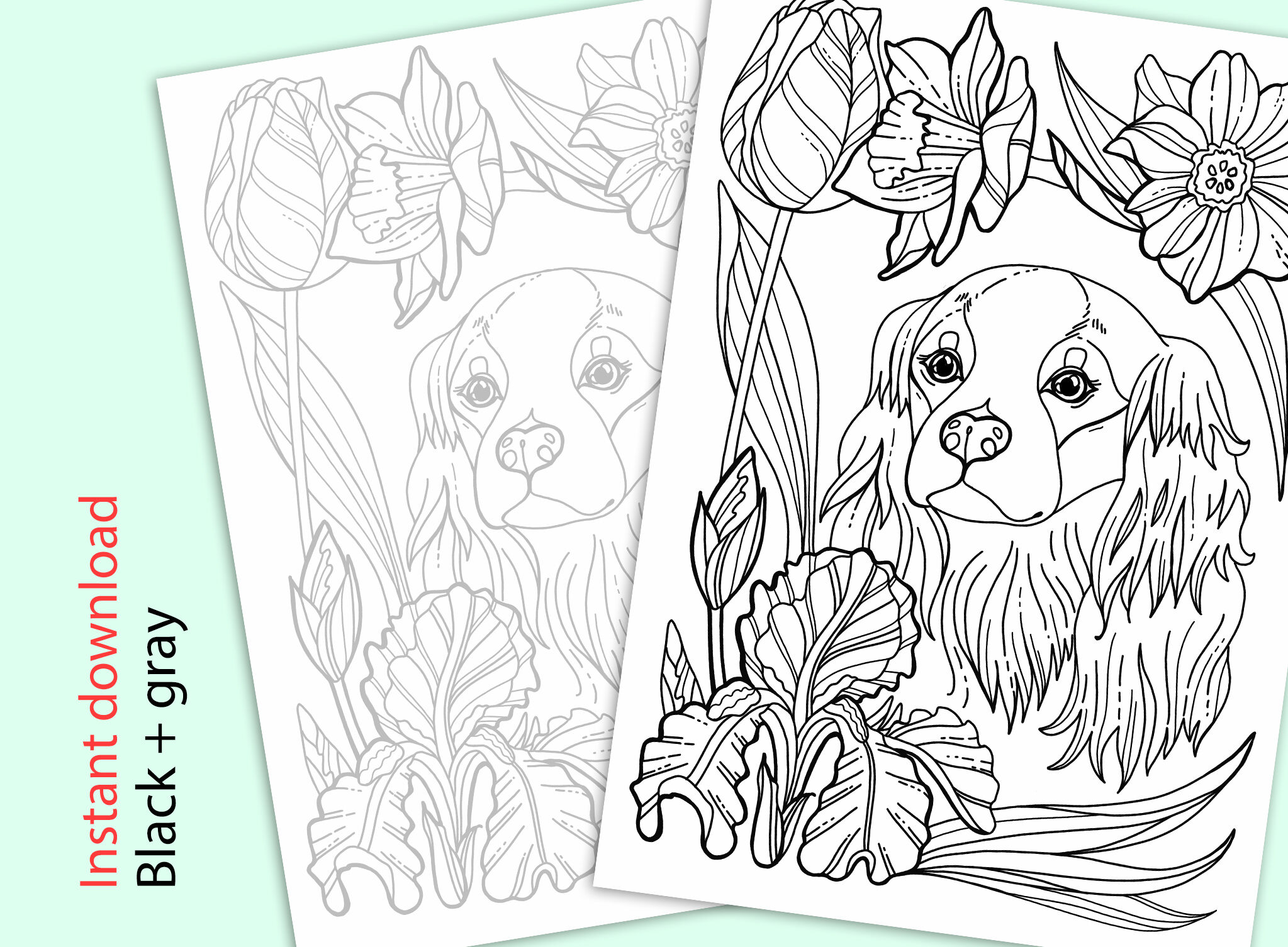 Cavalier King Charles Coloring Page By Aquarelloaquarelle