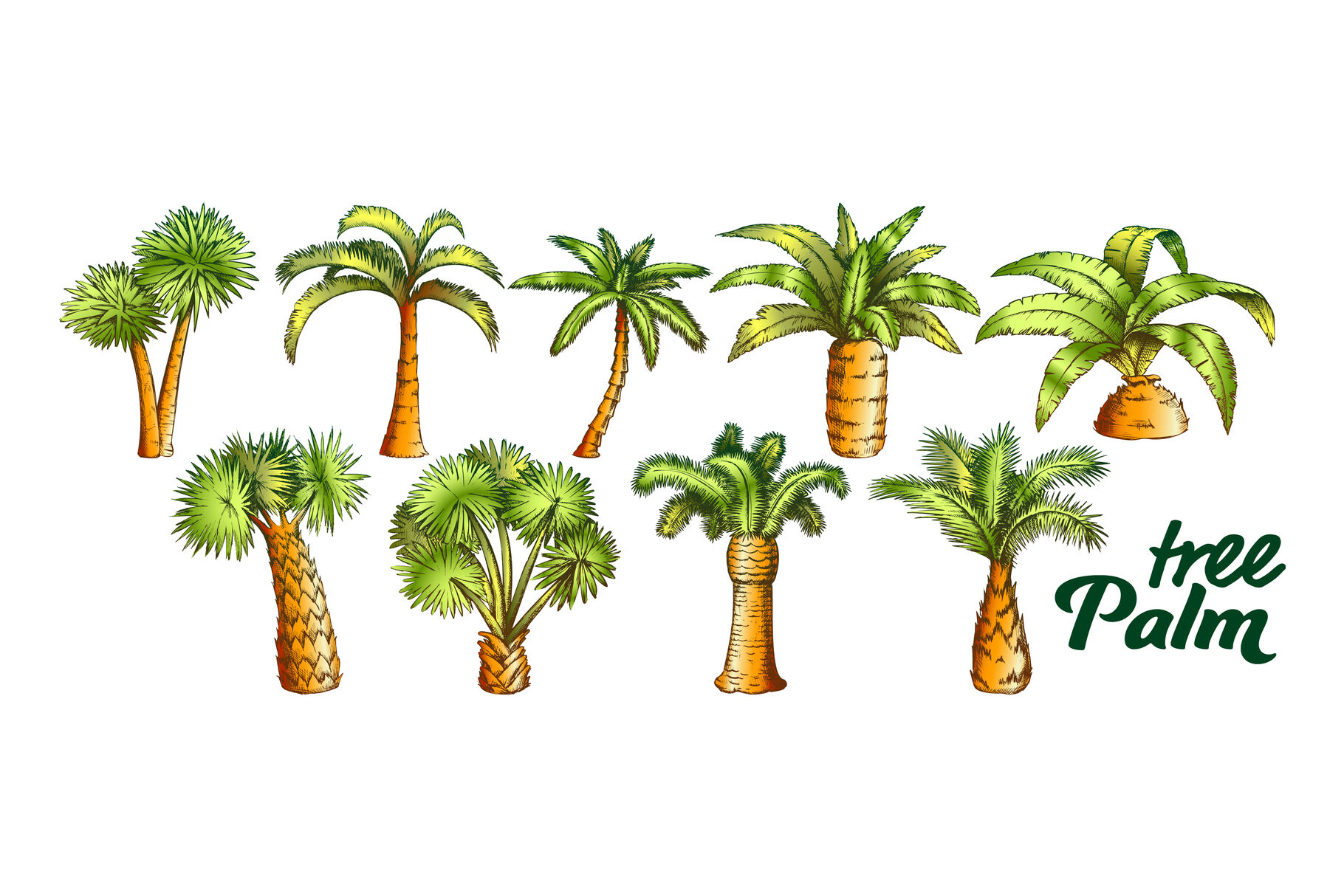 Palm High And Small Trunk Trees Set Color Vector By Pikepicture