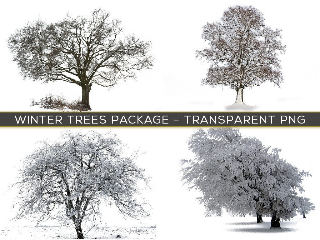 30 TRANSPARENT PNG Winter Trees In Snow Overlays By Digital
