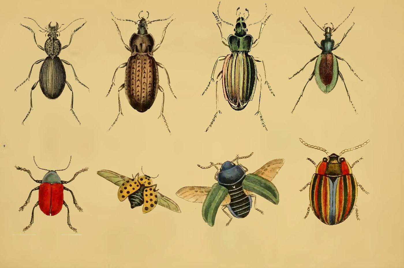 Vintage 85 Beetles By Jadugar Design Studio Thehungryjpeg Com