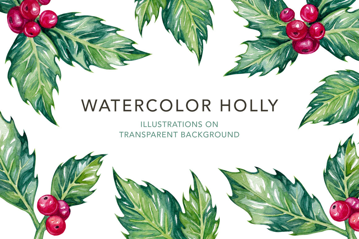 Watercolor Holly Illustrations By Olga Olmix Thehungryjpeg Com