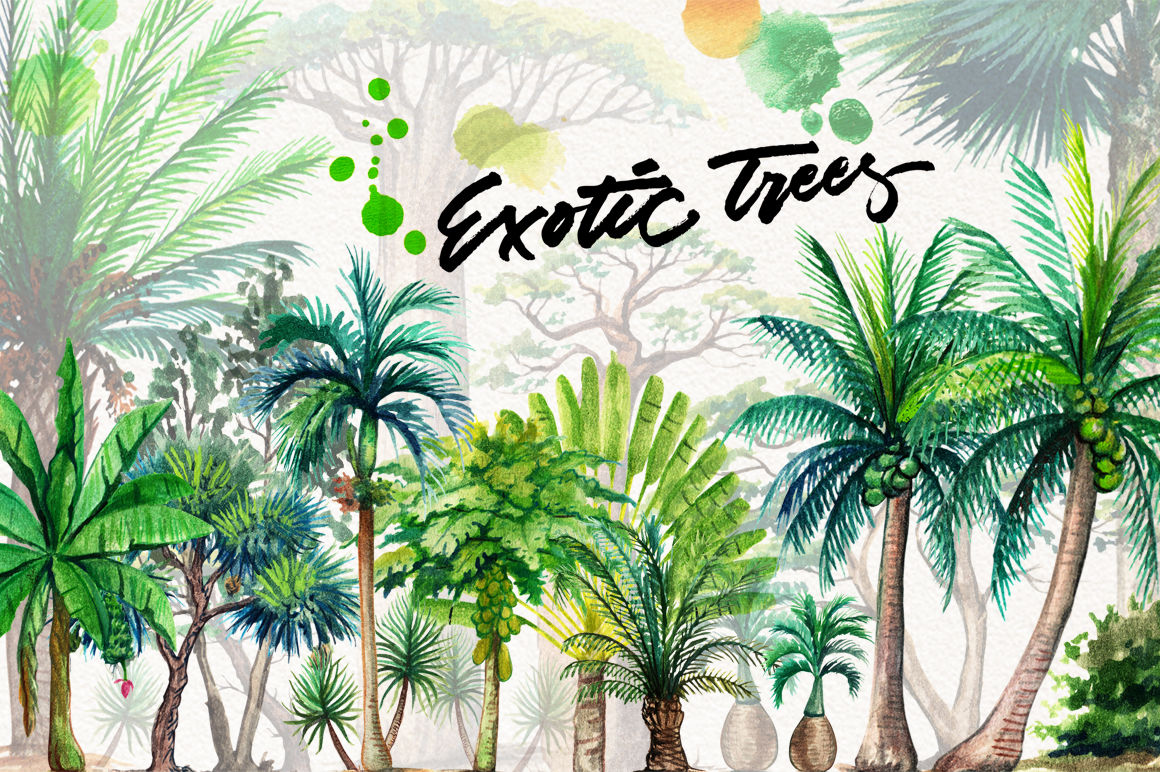 Watercolor Exotic Trees By Graphobia Thehungryjpeg Com