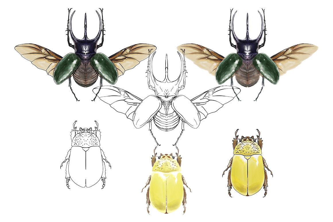 Hand Drawn Watercolor Painted Insects By Magiccolor