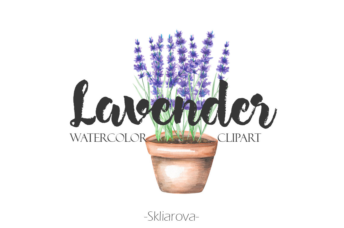 Lavender Flowers Watercolor By Happywatercolorshop Thehungryjpeg Com