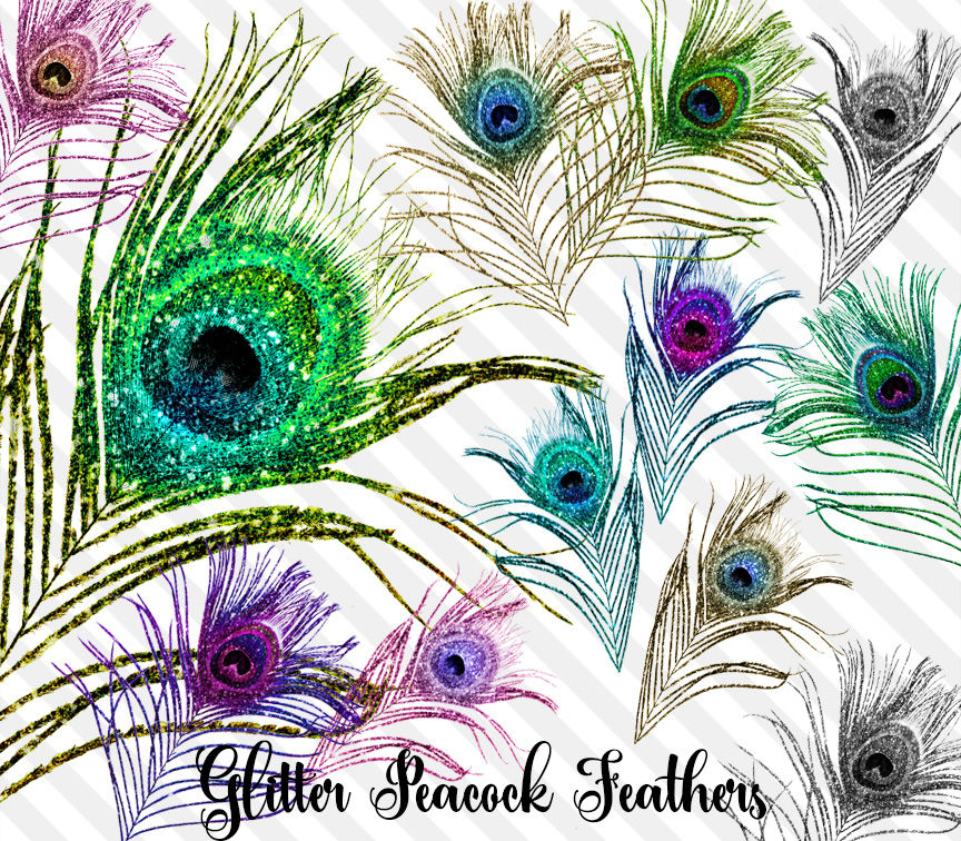 Peacock feathers clipart Royalty Free Vector Image