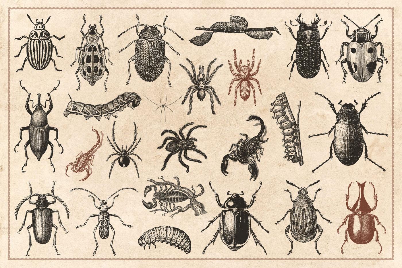 176 Vintage Wild Animals Vector By Brigantine Designs