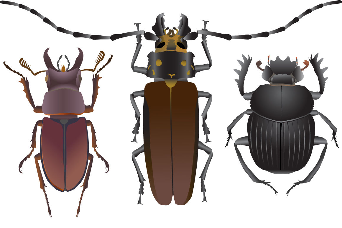 Beetles By Viktoria1703 Thehungryjpeg Com