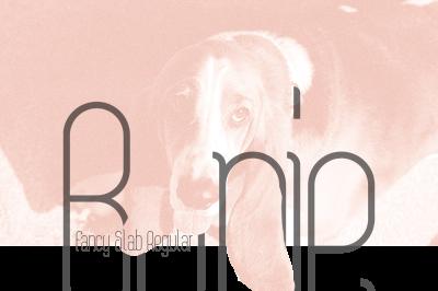 FREE Bonie Typeface